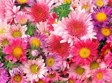 Статус про цветы