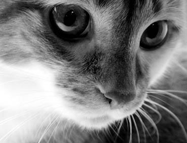Статусы про нас кошек