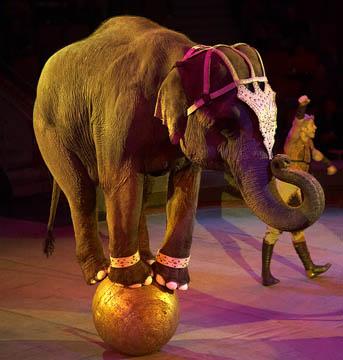 Статусы про цирк