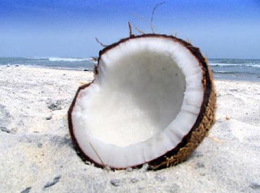 Статусы про кокосы