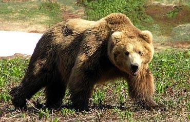Статусы про медведей