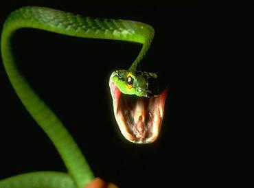 Статусы про змей