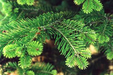 Статусы про елку