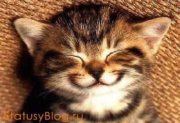 тупая улыбка фото